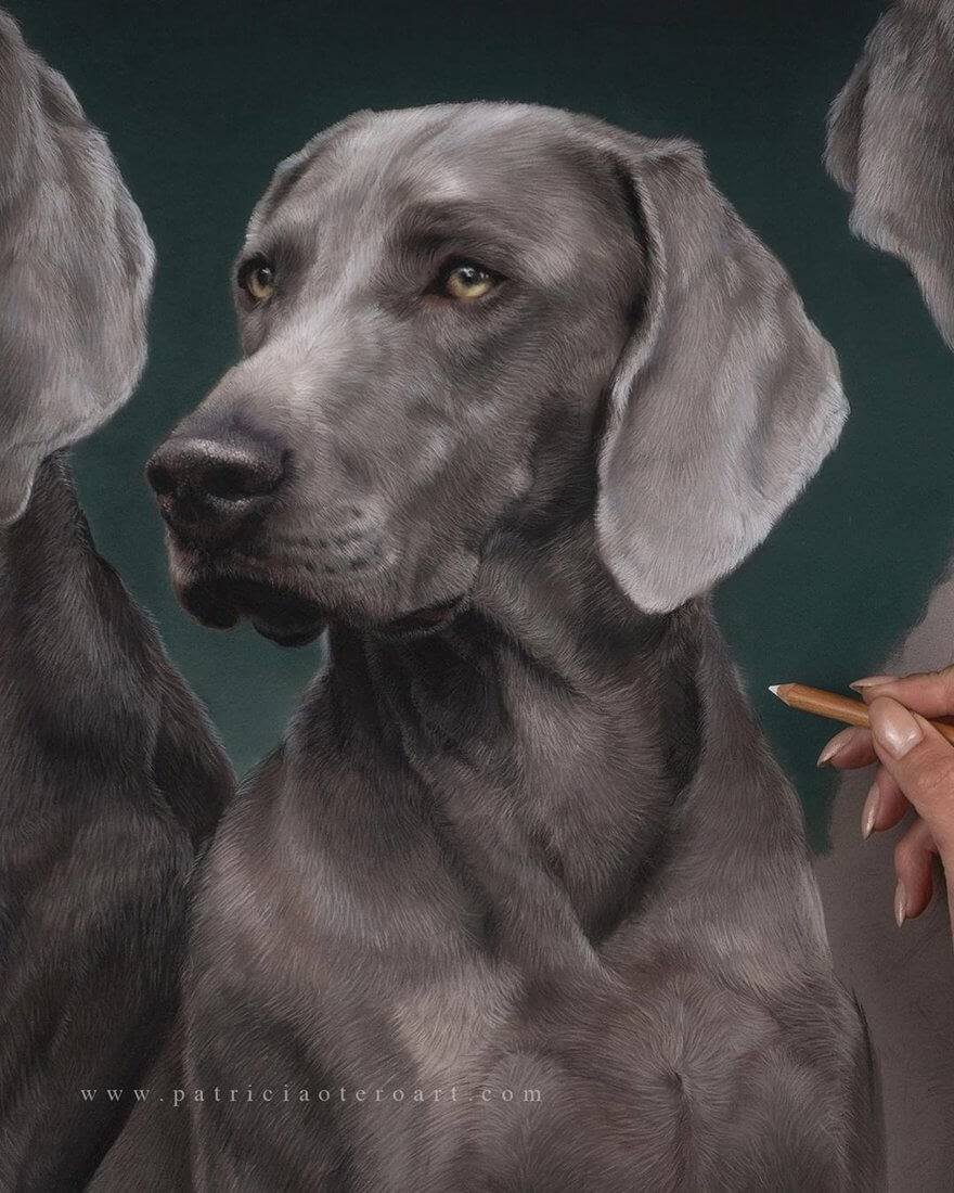 04-Weimaraners-Patricia-Otero-Gorgeous-Expressions-in-Dog-Drawings-www-designstack-co