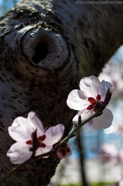 Petale de flori si pomi scaldate in soare