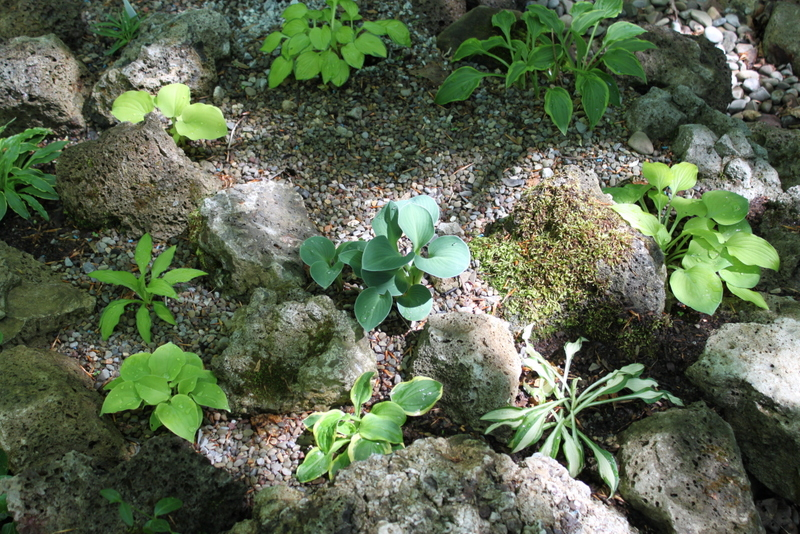Smug Creek Happenings: The Small Hosta Garden