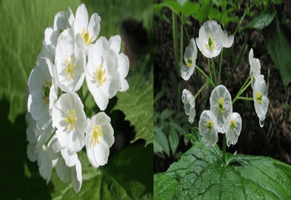 Natureza-Flor-cristal