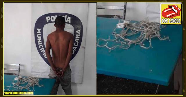Detenido por robarse unas luces de Navidad en Guacara