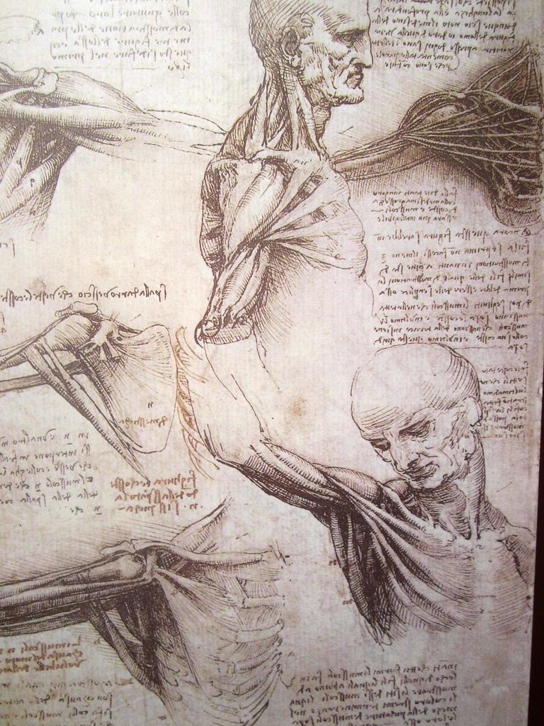 anatomía Da Vinci