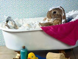 conejo bañandose en una tina