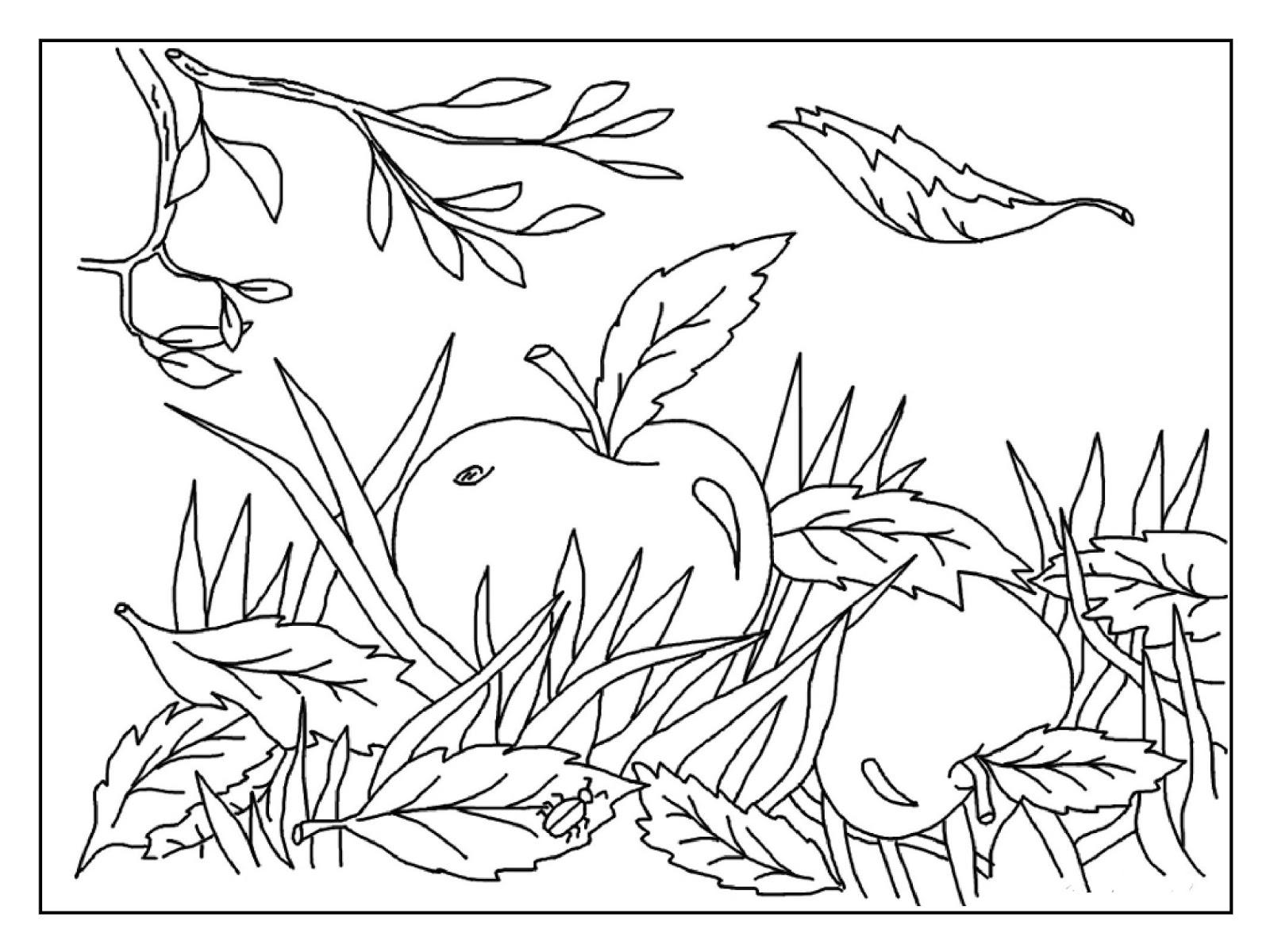 Мастера и умники: Раскраски Осень