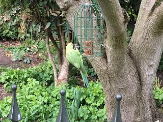 green parakeet on a bird feeder hanging from a tree