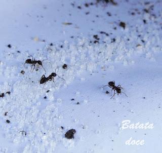 11 maneiras de acabar com a formigas