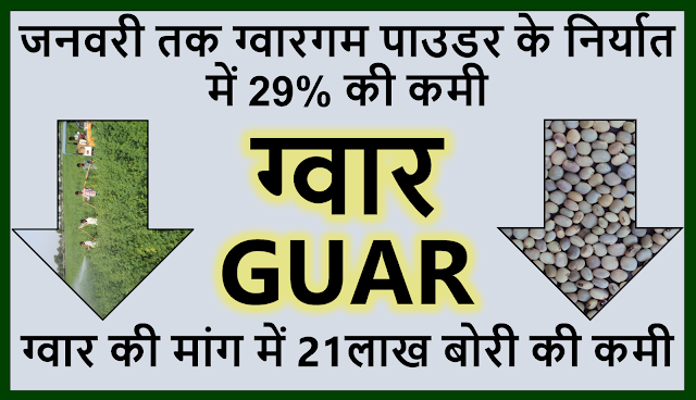 ग्वार गम पाउडर के निर्यात में  इस वर्ष जनवरी तक 29% की कमीl Guar, guar gum, guar price, guar gum price, guar demand, guar gum demand, guar seed production, guar seed stock, guar seed consumption, guar gum cultivation, guar gum cultivation in india, Guar gum farming, guar gum export from india , guar seed export, guar gum export, guar gum farming, guar gum cultivation consultancy, today guar price, today guar gum price, ग्वार, ग्वार गम, ग्वार मांग, ग्वार गम निर्यात 2018-2019, ग्वार गम निर्यात -2019, ग्वार उत्पादन, ग्वार कीमत, ग्वार गम मांग, Guar Gum, Guar seed, guar , guar gum, guar gum export from india, guar gum export to USA, guar demand USA, guar future price, guar future demand, guar production 2019, guar gum demand 2019