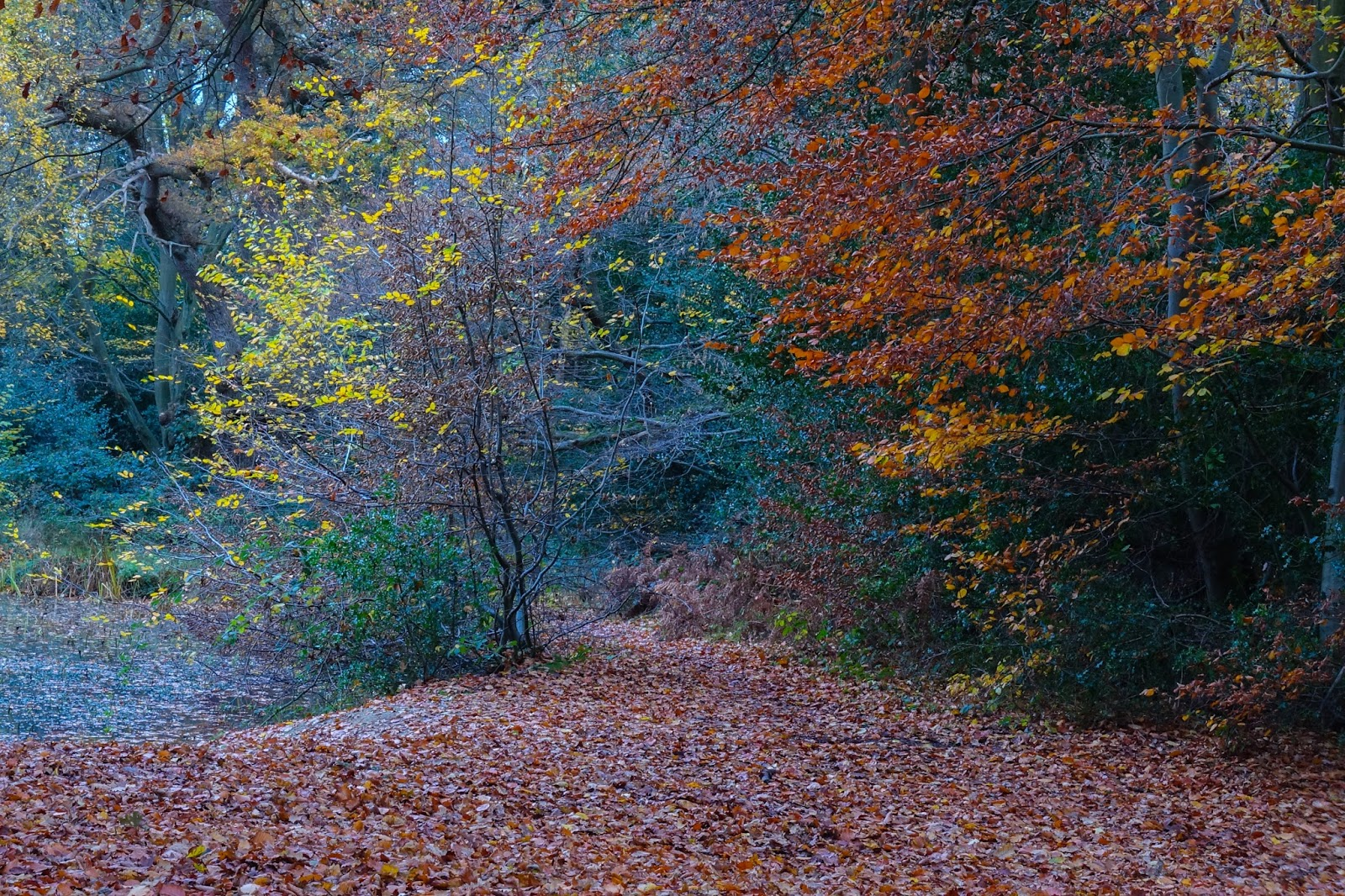 A path covered in brown leaves, the edge of a lake and trees in different shades of yellow, orange and brown