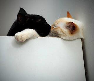 Gatti di San Valentino