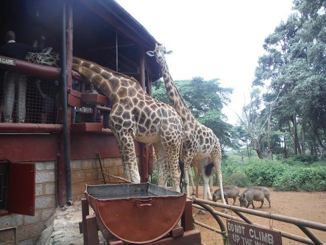 Girafe Centre