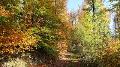 Wald beim Leenberg ob Niederbipp