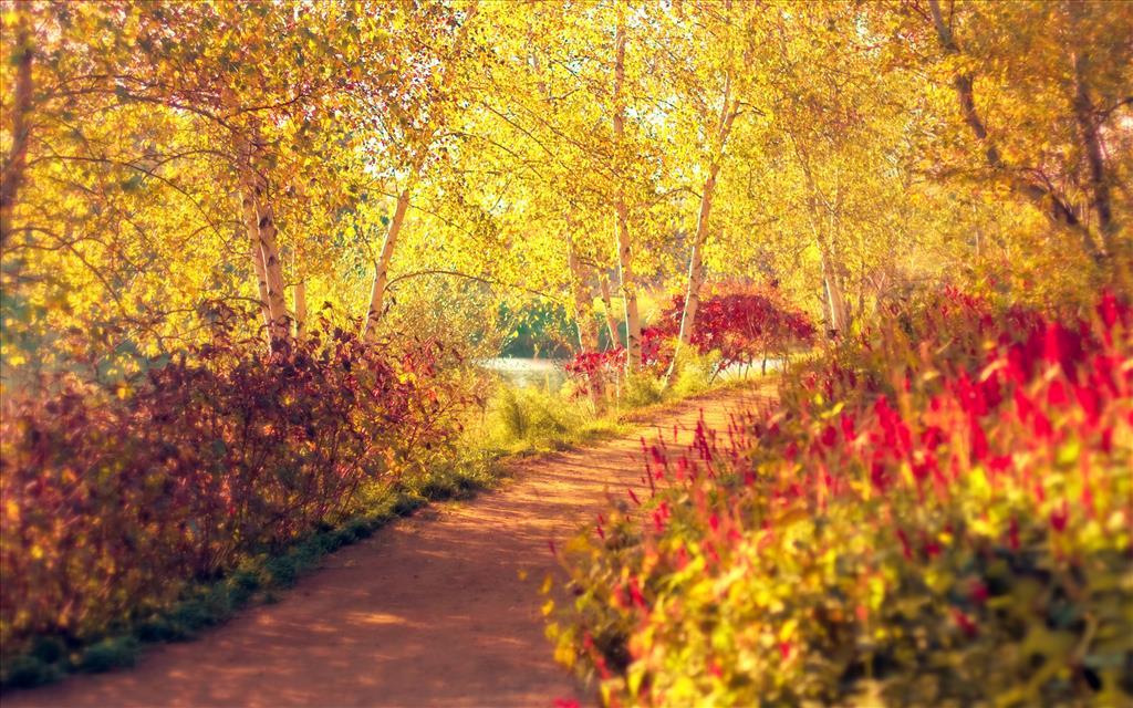 Fond d 39 cran automne hd gratuit fond d 39 cran hd for Photo nature hd gratuit
