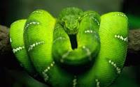 Seducción, son encantadores de serpientes