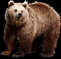 Spirit Totem Bear