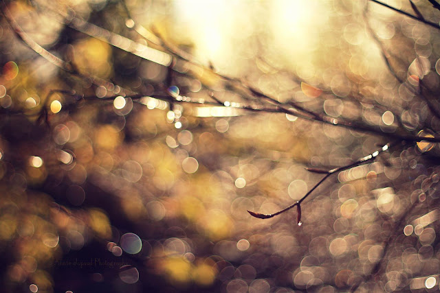 fabulous bokeh background and raindrops on branches