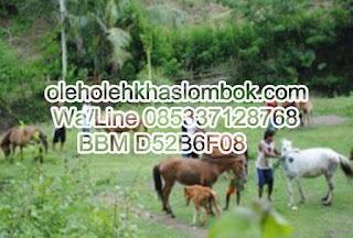 Agen Susu Kuda Liar Di Jakarta Timur
