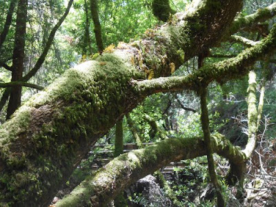 redwood tree, moss, nature, spiritual nature, spiritual imbalance