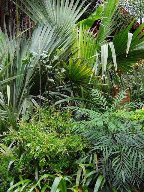 (07) Le jardin de Bésignoles - Privas - Page 2 DSC08152