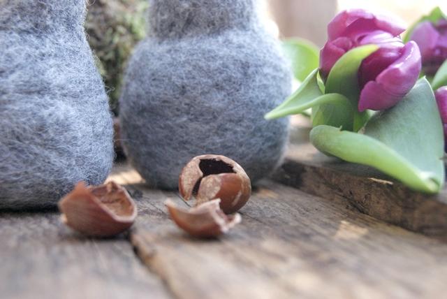Haselnuss von Eichhörnchen aufgeknackt