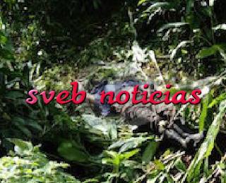 Este Lunes hallan a hombre muerto en un arroyo de Coatepec Veracruz
