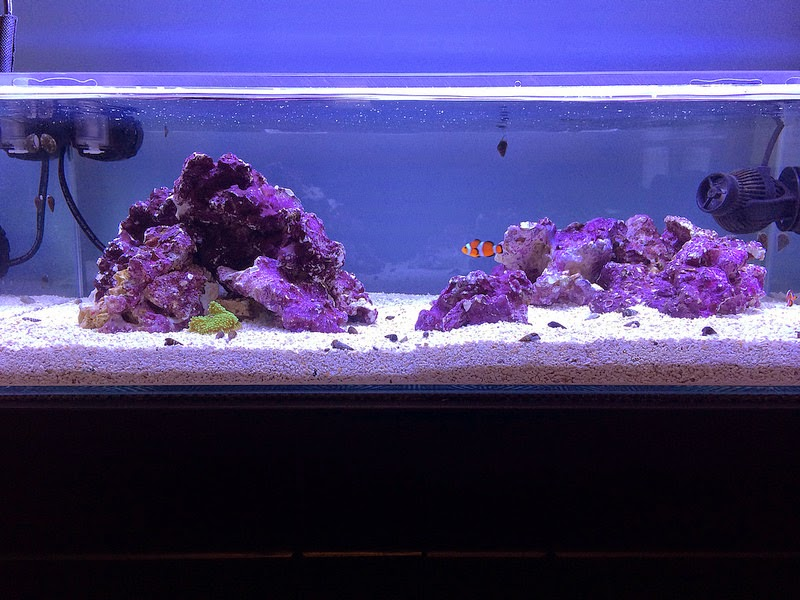Aquascape Eye Candy - 11 Examples for Inspiration - Marine ...
