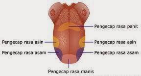 Bagian lidah