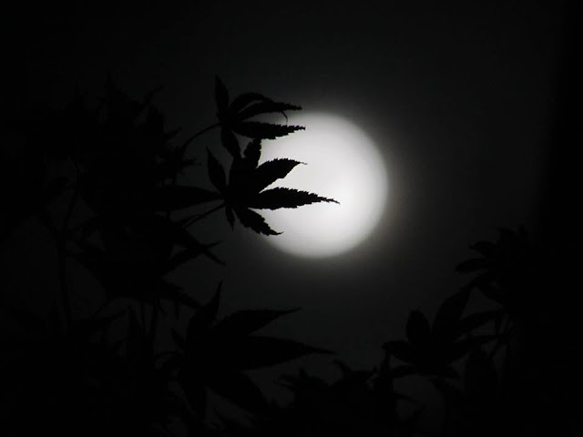 Outstanding Pictures of SUPERMOON as Seen From South Korea