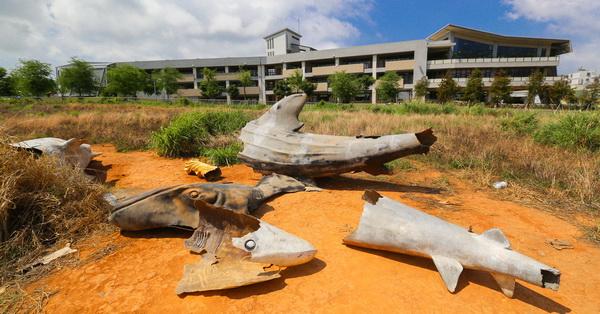 台中西屯|鯊魚墳場|特別的拍照景點|好多鯊魚的屍體呀