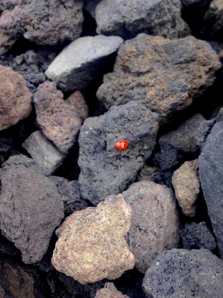 Zastygła lawa i biedronka zimą na Etnie