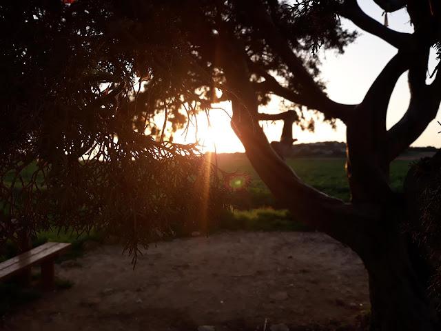 Cape Greco Love tree