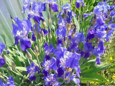 красивые цветы июля