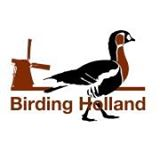 Guided birding in the Netherlands