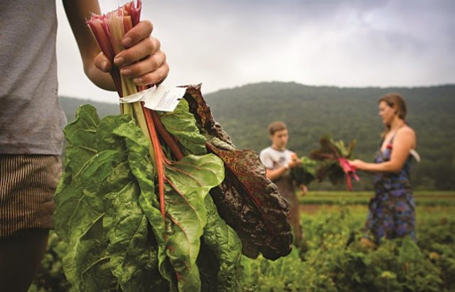 Θεσπρωτία: Αυξάνονται οι νέοι αγρότες στη Θεσπρωτία, παρά τις δυσοίωνες προοπτικές...