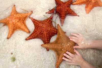 Cuento Las estrellas del mar
