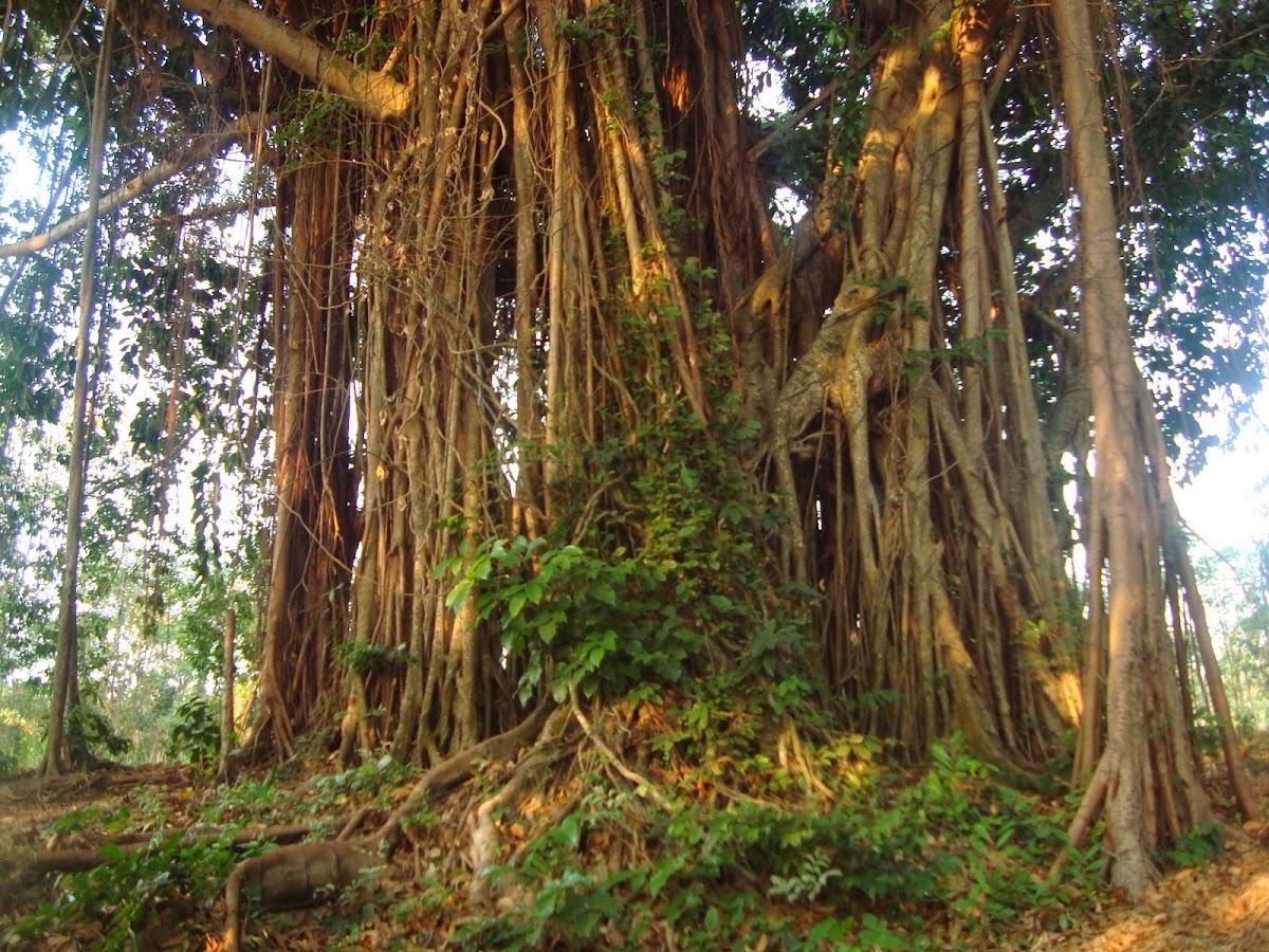 Telaga Sejuta Akar - Tempat Wisata di Jepara