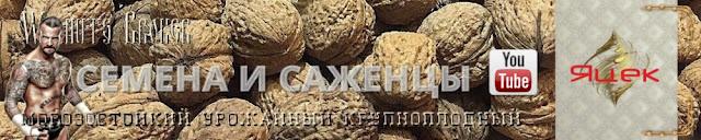 Семена ореха яцек, 985674877, 0957351986, горіх яцек купить Walnuts Broker