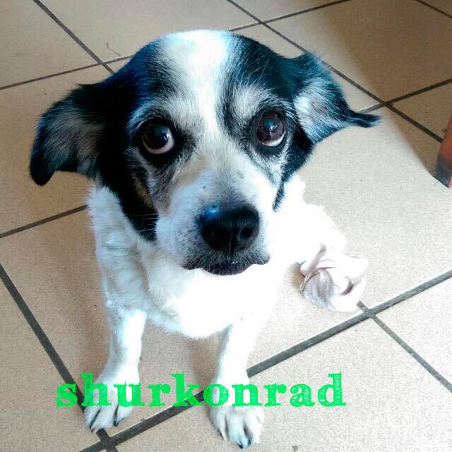 cachorra cachorros y tecnologia shurkonrad pet puppy dog