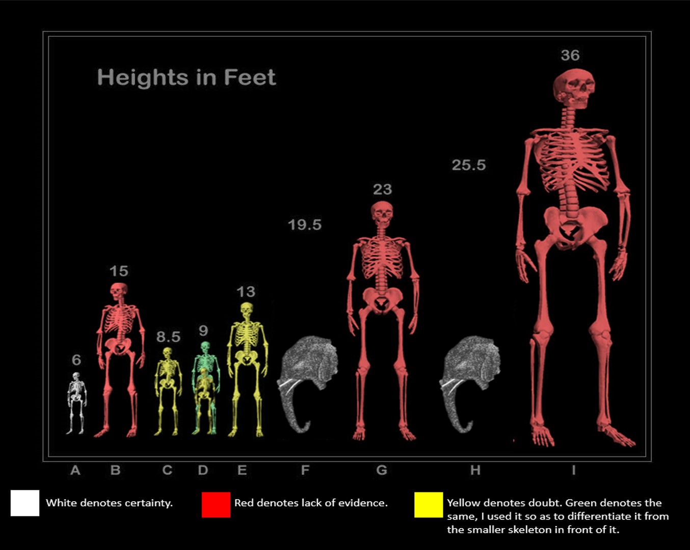 Grading The Giant Human Skeleton Chart True Freethinker