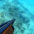 Χελώνα Καρέτα -Καρέτα στα  νερά της Πρέβεζας![βίντεο]