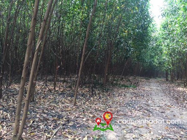 Bán đất Vĩnh An Vĩnh Cửu Đồng Nai