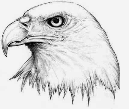 Eagles head tattoo stencil