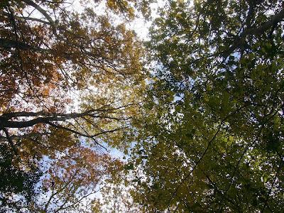 大阪府・府民の森〔緑の文化園〕むろいけ園地ハイキング 紅葉