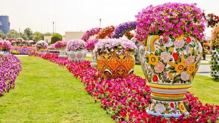 en solo un par de aos este jardn floreci a la mitad del desierto de los emiratos rabes unidos
