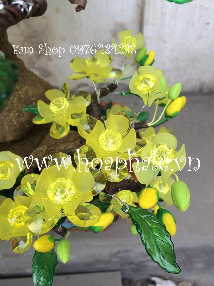 Hoa mai lam goc bonsai mai dao o Nguyen Huy Tu