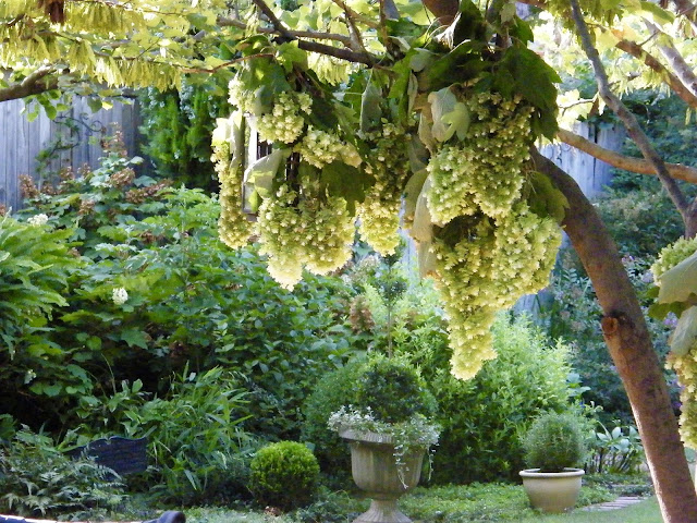 Hanging baskets, wrought iron lanterns and pots of topiary help beautify a backyard vignette.