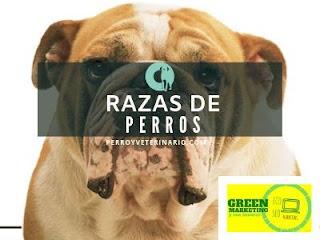Perros, plataforma de contenidos de ECO SEO Green Marketing