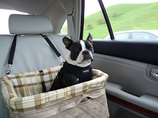 6 of best  Car Seat Covers For Dogs