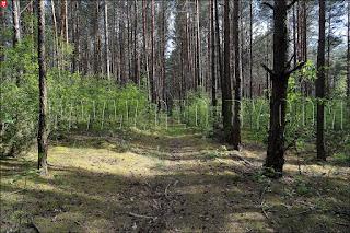 Старая дорога к штабу роты пограничной КОП ''Миколаевщина''
