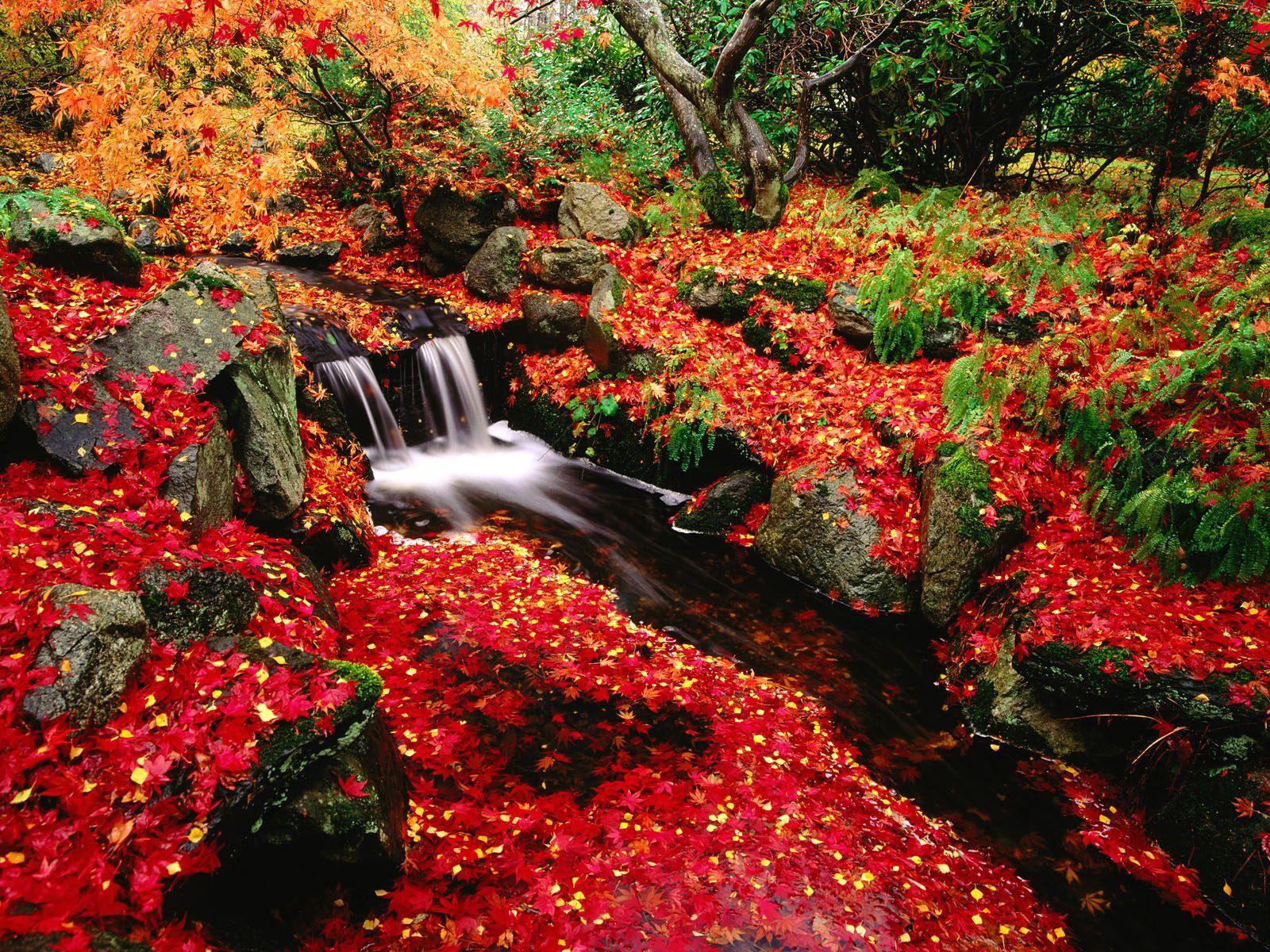 Japan Garden Flowers: Japan Flower Garden