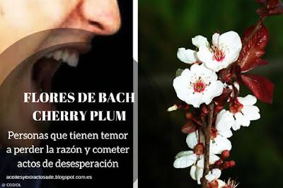 Cherry Plum Flores de Bach ayuda a tener Tranquilidad y Paz Interior